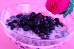 Yogurt Blueberries stock photos