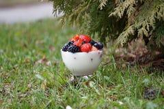 Yogurt de fruta fresca imagens de stock