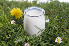 Yogurt jar on the grass with flowers Stock Photography