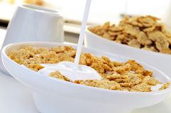 Yogurt and oatmeal cereals Royalty Free Stock Photo
