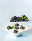 Yogurt with ripe blueberries Royalty Free Stock Image