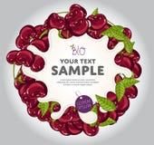 Yogurt Splash on Cherry Wreath, Vector. Stock Photos