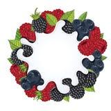 Yogurt splash isolated on wild berries, vector Royalty Free Stock Images