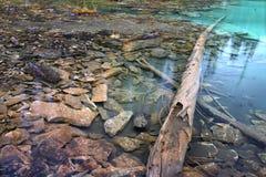 Yoho国家公园池塘 免版税图库摄影