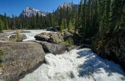 yoho för naturlig park för bro nationell Arkivbild