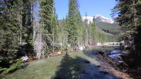 The creek in Emerald Lake area. Yoho National park, British Columbia, Canada stock video