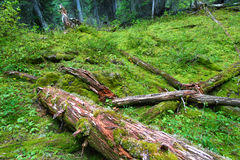 Yoho National Park Forest Floor Royalty Free Stock Photos