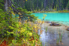 Free Yoho National Park Pond Royalty Free Stock Photography - 27094317