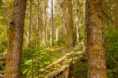 Yoho National Park skog, British Columbia, Kanada Royaltyfri Bild
