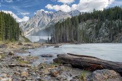 Yoho Park Wapta falls Royalty Free Stock Photos