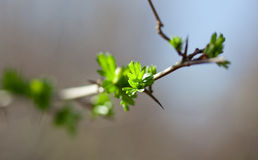 Yoing twig of tree in forest Royalty Free Stock Photo