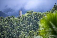 Yokahútoren - het Nationale Bos van Gr Yunque, Puerto Rico royalty-vrije stock afbeeldingen