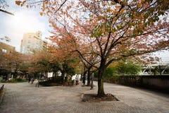 Yokoamicho公园在秋天 免版税库存图片