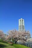Yokohama gränsmärketorn och de körsbärsröda blomningarna Arkivfoto