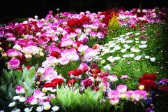 Free Yokohama Japan Colorful Flower Garden Royalty Free Stock Images - 183858419