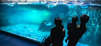 YOKOHAMA,JAPAN MARCH 13,2019 Family standing and looking at a group of Emperor penguins in the display area at Hakkeijima Sea. Paradise aquarium museum stock images