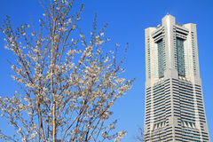 Yokohama landmark tower and cherry blossoms in Kanagawa Stock Image
