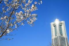 Yokohama landmark tower and cherry blossoms in Kanagawa Stock Photography