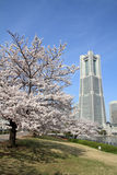 Yokohama-Markstein-Turm und die Kirschblüten Stockbilder