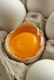 Yolk Stock Images