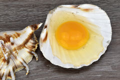 Yolk and albumen. Egg in sea shells on the wooden background. Egg Stock Images