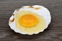 Yolk and albumen. Egg in sea shells on the wooden background. Royalty Free Stock Images