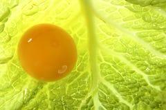Yolk amarelo do ovo sobre a folha do repolho fotografia de stock royalty free