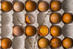 Yolk of broken egg in eggshell and several eggs in carton egg bo. X decorated with dried branches. Copy space. Advertising, commercial design stock photos