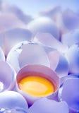 Yolk de ovo no azul fotos de stock royalty free