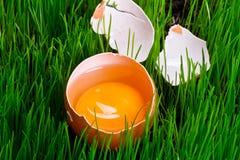 Yolk of an egg Stock Photos