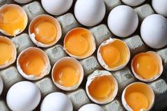 Yolk among many white eggs Stock Photo