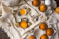 Yolks of broken chicken egg in eggshell and several chicken and. Quail eggs decorated with dried branches on vintage style wooden table covered with crumpled royalty free stock photos
