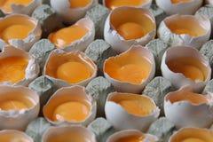 Yolks in a carton of eggs Stock Photo