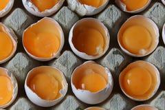 Yolks in a carton of eggs Stock Photography