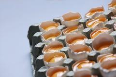 Yolks in a carton of eggs Stock Photos