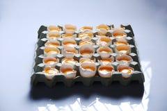 Yolks in a carton of eggs Royalty Free Stock Photos