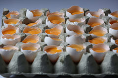 Yolks in a carton of eggs Royalty Free Stock Photography