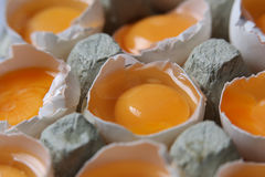 Yolks in a carton of eggs Stock Images