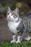 Yong cat Royalty Free Stock Photo