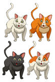 Yong cats in four colours Royalty Free Stock Photo