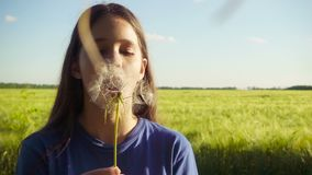 Girl blowing up the dandelion seeds on green field. Yong girl blowing up the dandelion seeds on green field at sunset, slow motion 250 fps stock video