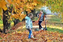 Yong girls in the autumn season. royalty free stock photography