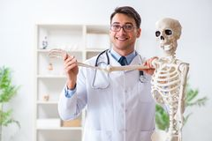 The yong male doctor with skeleton  on white. Yong male doctor with skeleton  on white Stock Photo