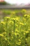 Yong roślina Zdjęcia Stock
