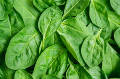 Yong spinach Stock Photo