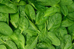 Yong spinach Stock Images