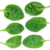 Yong spinach Royalty Free Stock Photos
