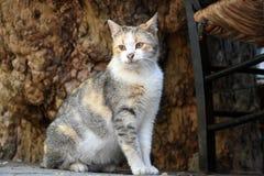 Yong strimmig kattkatt observera omge fotografering för bildbyråer