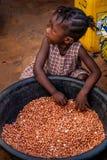 Yongoro,塞拉利昂,西非 免版税库存照片