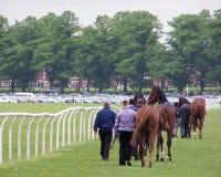 York races Royalty Free Stock Photos
